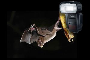 Curso de Flash para Viagem e Natureza