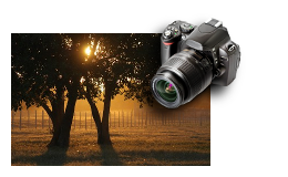 Petrar - Photography Experience