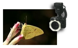 Curso de Macrofotografia