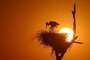 Como fotografar o por do sol